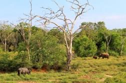 Sri Lanka Travel Itinerary 2 (42)