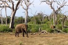 Sri Lanka Travel Itinerary 2 (49)