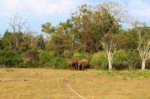Sri Lanka Travel Itinerary 2 (50)