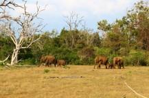 Sri Lanka Travel Itinerary 2 (51)