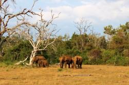Sri Lanka Travel Itinerary 2 (52)