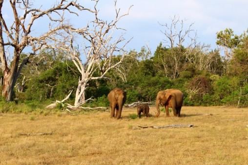 Sri Lanka Travel Itinerary 2 (55)