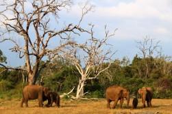 Sri Lanka Travel Itinerary 2 (56)
