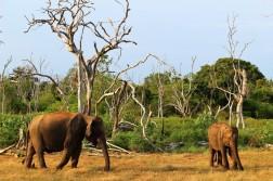 Sri Lanka Travel Itinerary 2 (58)