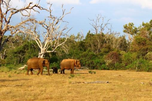 Sri Lanka Travel Itinerary 2 (65)