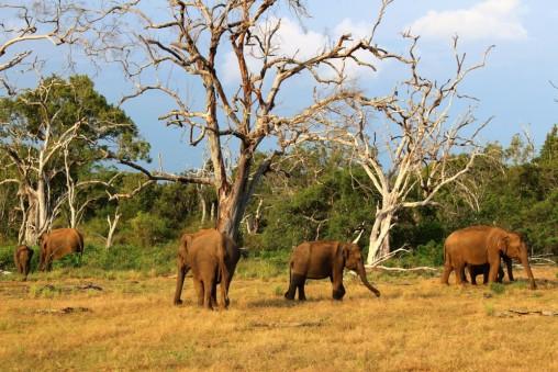 Sri Lanka Travel Itinerary 2 (66)