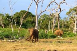 Sri Lanka Travel Itinerary 2 (67)