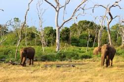 Sri Lanka Travel Itinerary 2 (68)