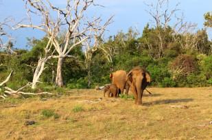Sri Lanka Travel Itinerary 2 (69)