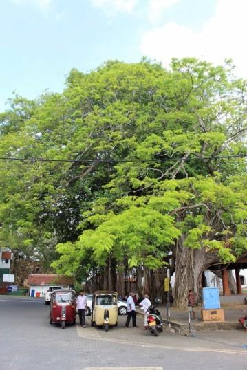 Sri Lanka Travel Itinerary (21)