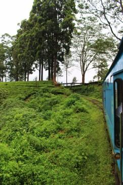 Sri Lanka Travel Itinerary 4 (106)