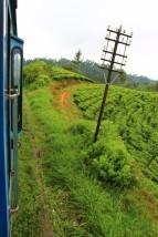 Sri Lanka Travel Itinerary 4 (112)