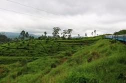 Sri Lanka Travel Itinerary 4 (115)