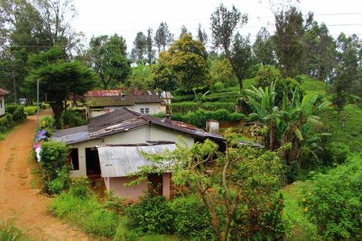 Sri Lanka Travel Itinerary 4 (117)