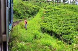Sri Lanka Travel Itinerary 4 (118)