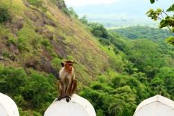 Sri Lanka Travel Itinerary 5 (105)