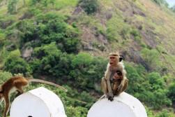Sri Lanka Travel Itinerary 5 (106)