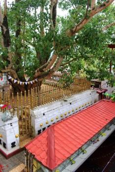Sri Lanka Travel Itinerary 5 (17)