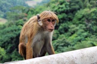 Sri Lanka Travel Itinerary 5 (58)