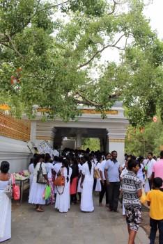 Sri Lanka Travel Itinerary 6 (38)