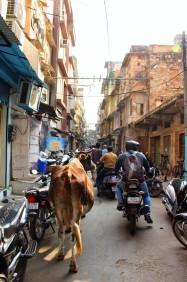 Golden Triangle India Travel Blog (106)