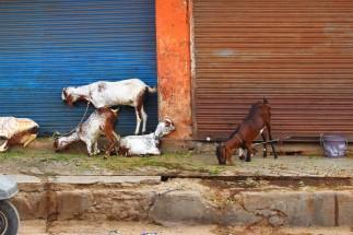 Golden Triangle India Travel Blog (113)