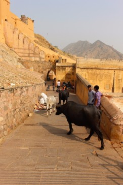 Golden Triangle India Travel Blog (134)