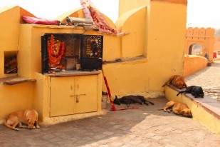 Golden Triangle India Travel Blog (138)