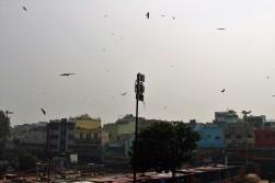 Golden Triangle India Travel Blog (14)