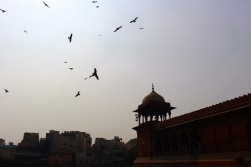 Golden Triangle India Travel Blog (15)