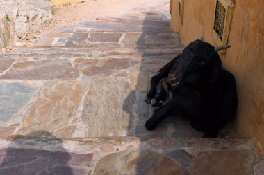 Golden Triangle India Travel Blog (171)