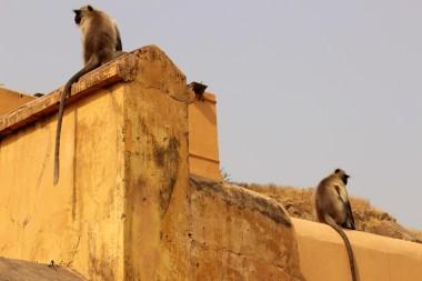 Golden Triangle India Travel Blog (172)