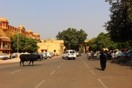 Golden Triangle India Travel Blog (70)