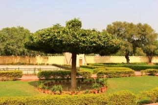 Golden Triangle India Travel Blog (78)
