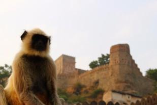 Pushkar to Udaipur India Travel Blog (114)