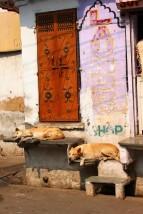 Pushkar to Udaipur India Travel Blog (120)
