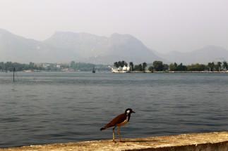 Pushkar to Udaipur India Travel Blog (171)