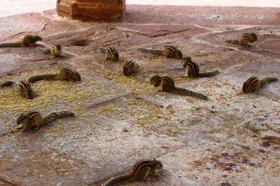 Pushkar to Udaipur India Travel Blog (31)