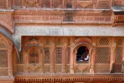 Pushkar to Udaipur India Travel Blog (57)