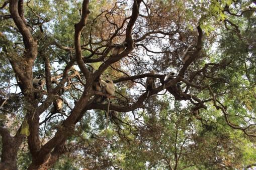 Pushkar to Udaipur India Travel Blog (8)