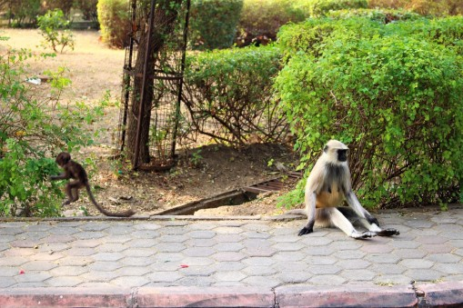 Pushkar to Udaipur India Travel Blog (95)