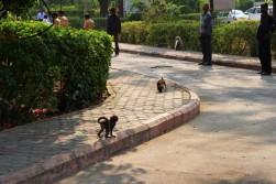 Pushkar to Udaipur India Travel Blog (96)