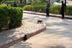 Pushkar to Udaipur India Travel Blog (97)