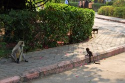 Pushkar to Udaipur India Travel Blog (98)