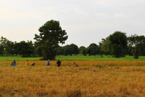 Cambodia Travel Blog (116)