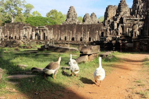 Cambodia Travel Blog (27)
