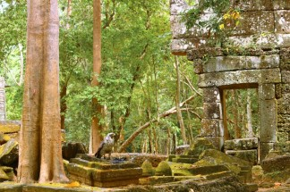 Cambodia Travel Blog (54)