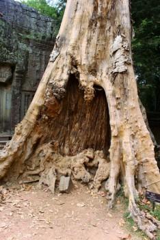 Cambodia Travel Blog (61)