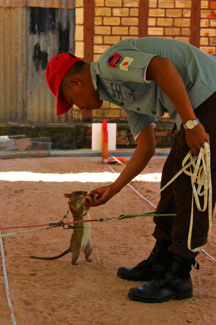Cambodia Travel Blog (74)