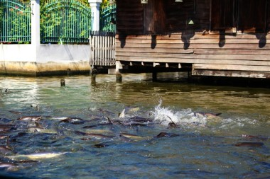 Thailand Travel Blog (42)